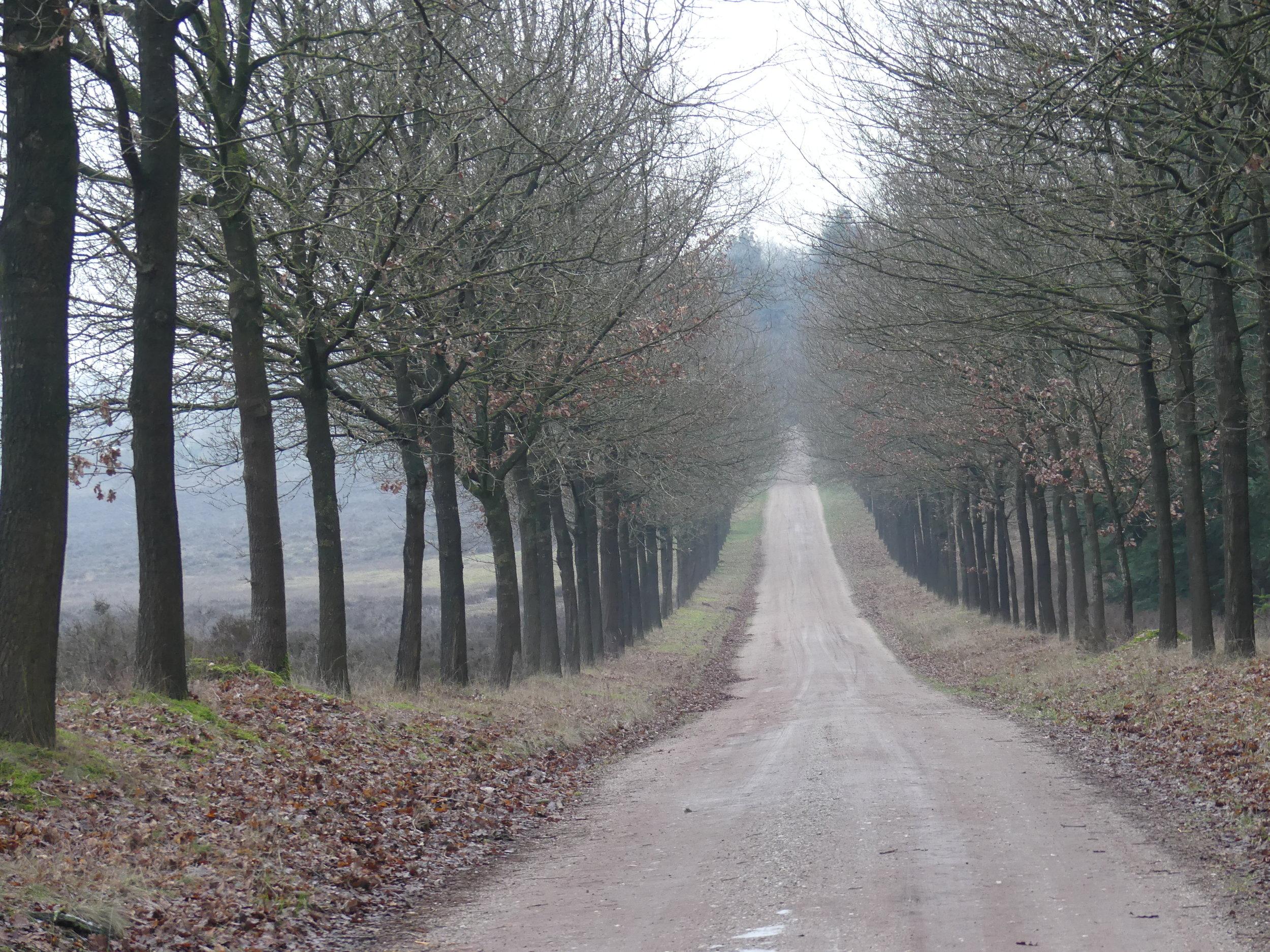 De Sallandse Heuvelrug - Palthe