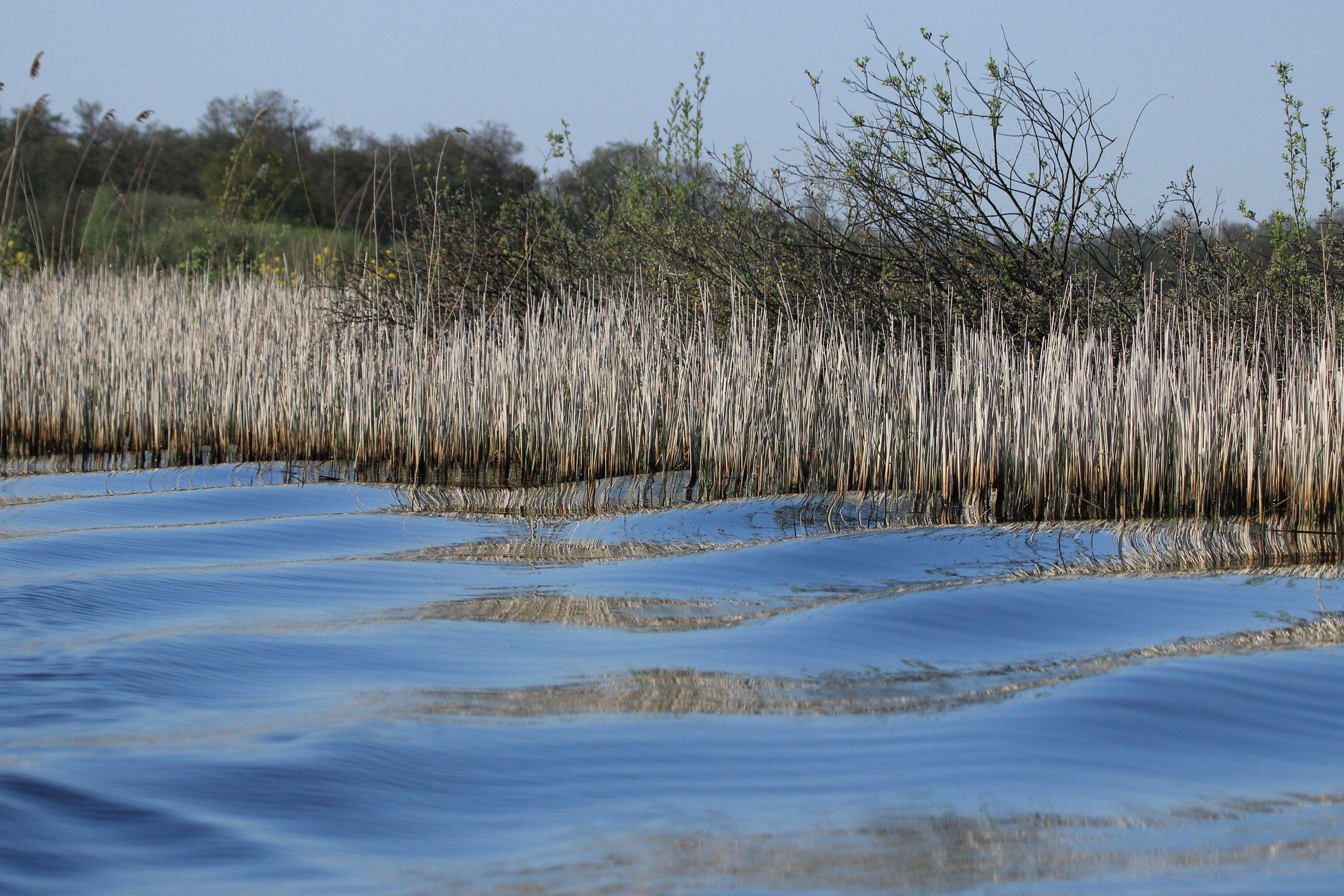 Natuurgebied De Wieden