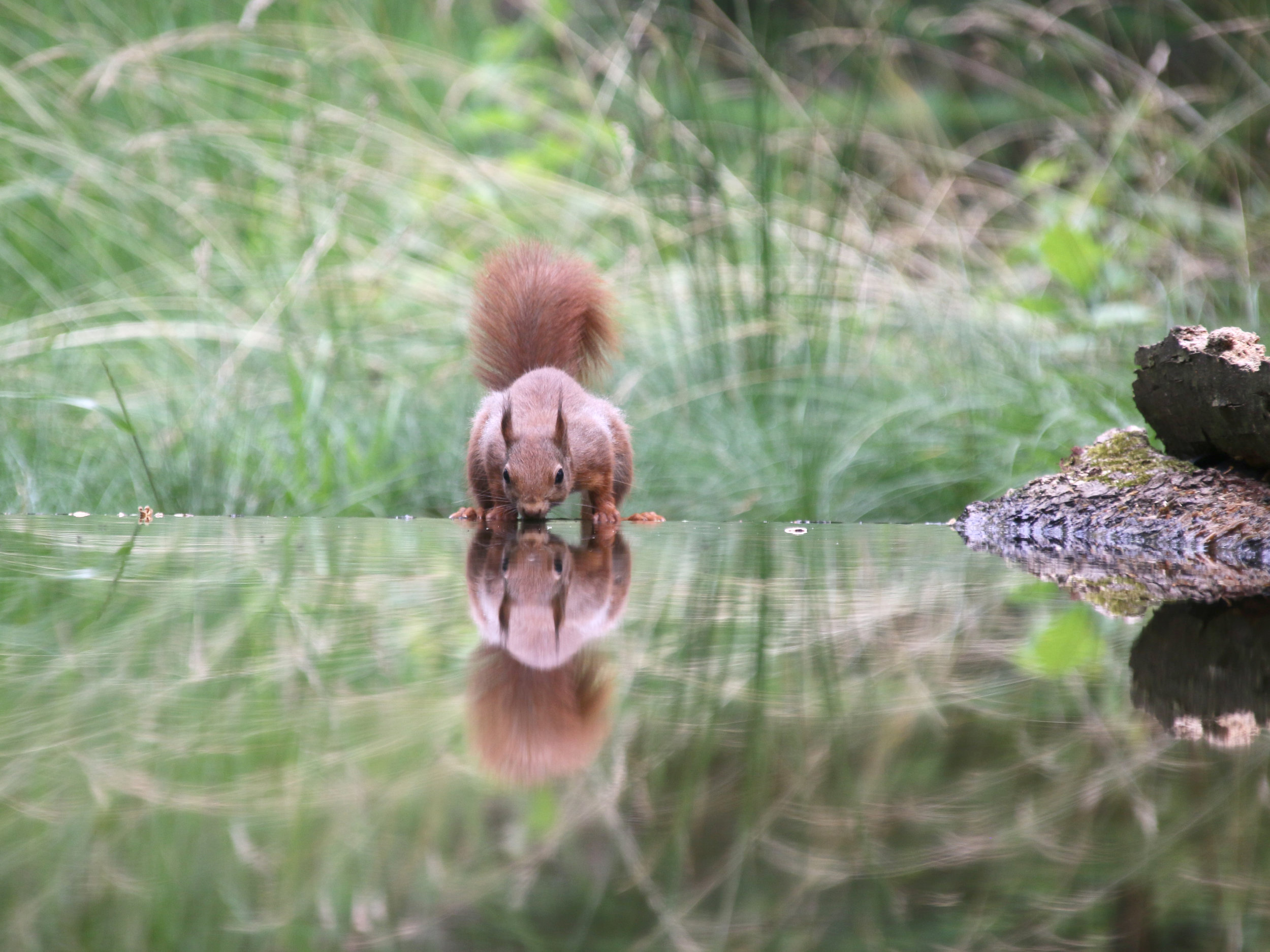 Fotograaf Marja Overmars - Eekhoorn