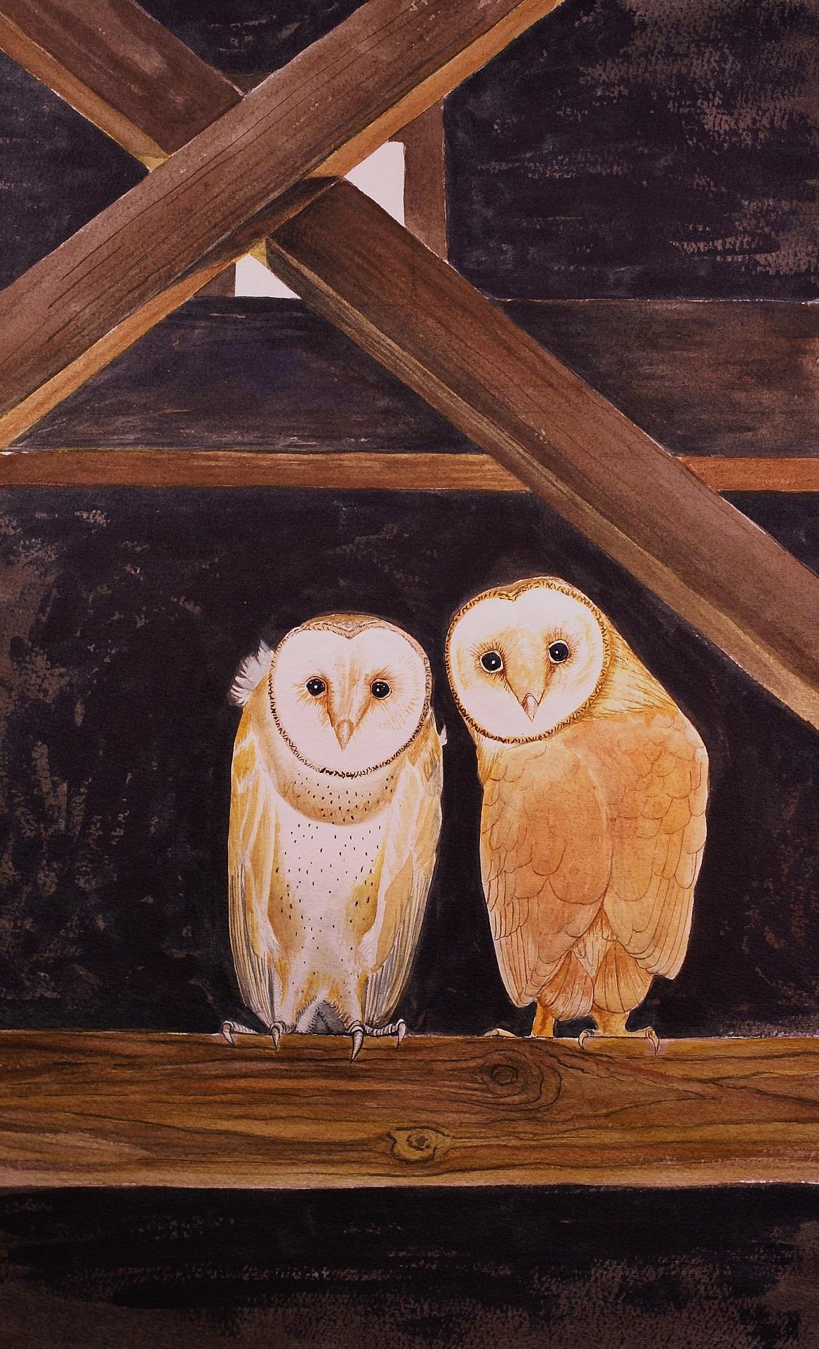 barn owl sized.jpg