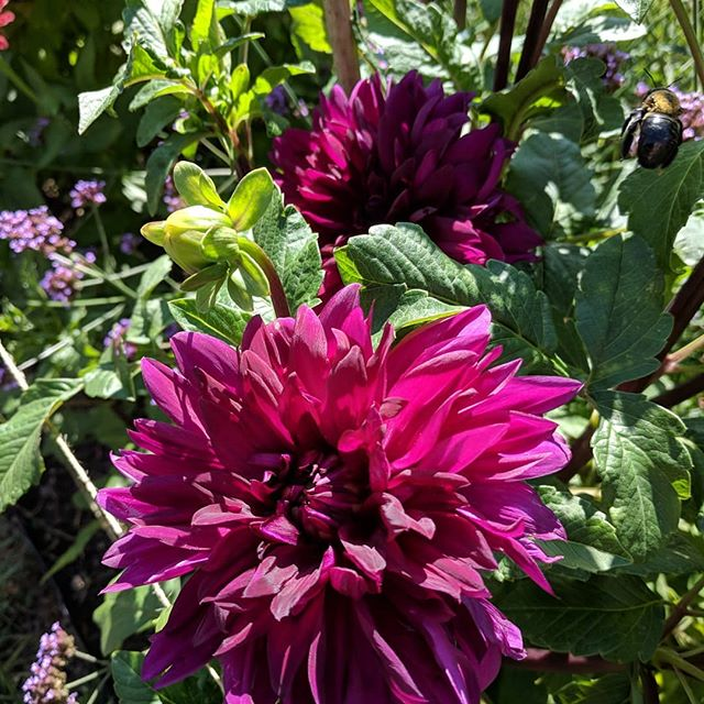 Sarah recommends zinnias as a rewarding start to a cutting garden. Dahlias are also a favorite.