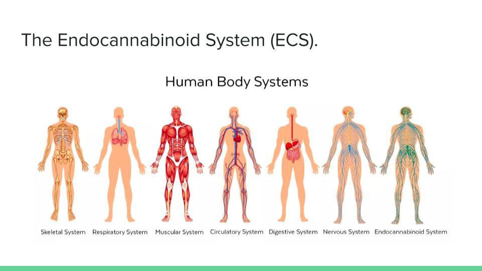 ECS_ An introduction (1).jpg
