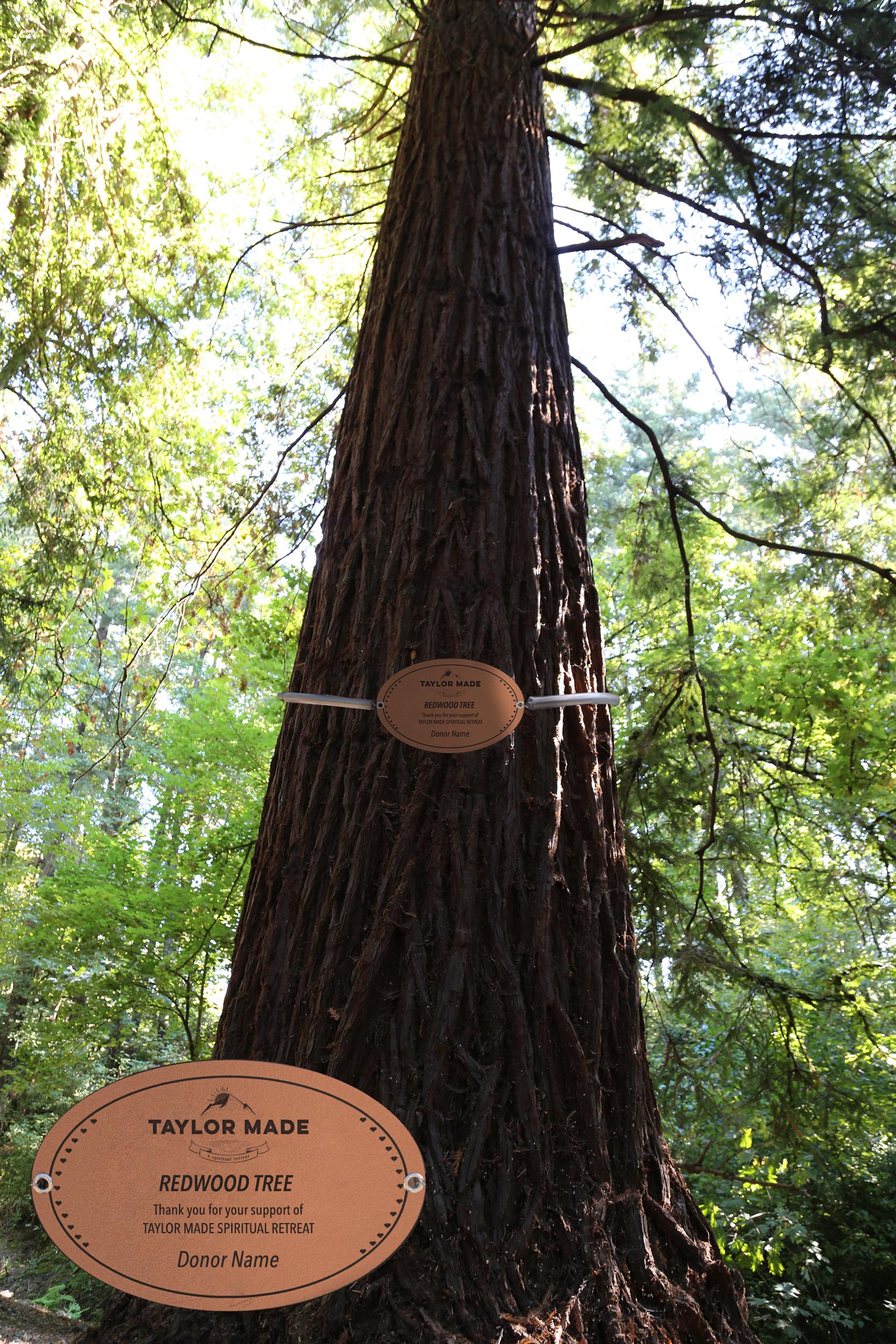 TM-tree-name.jpg