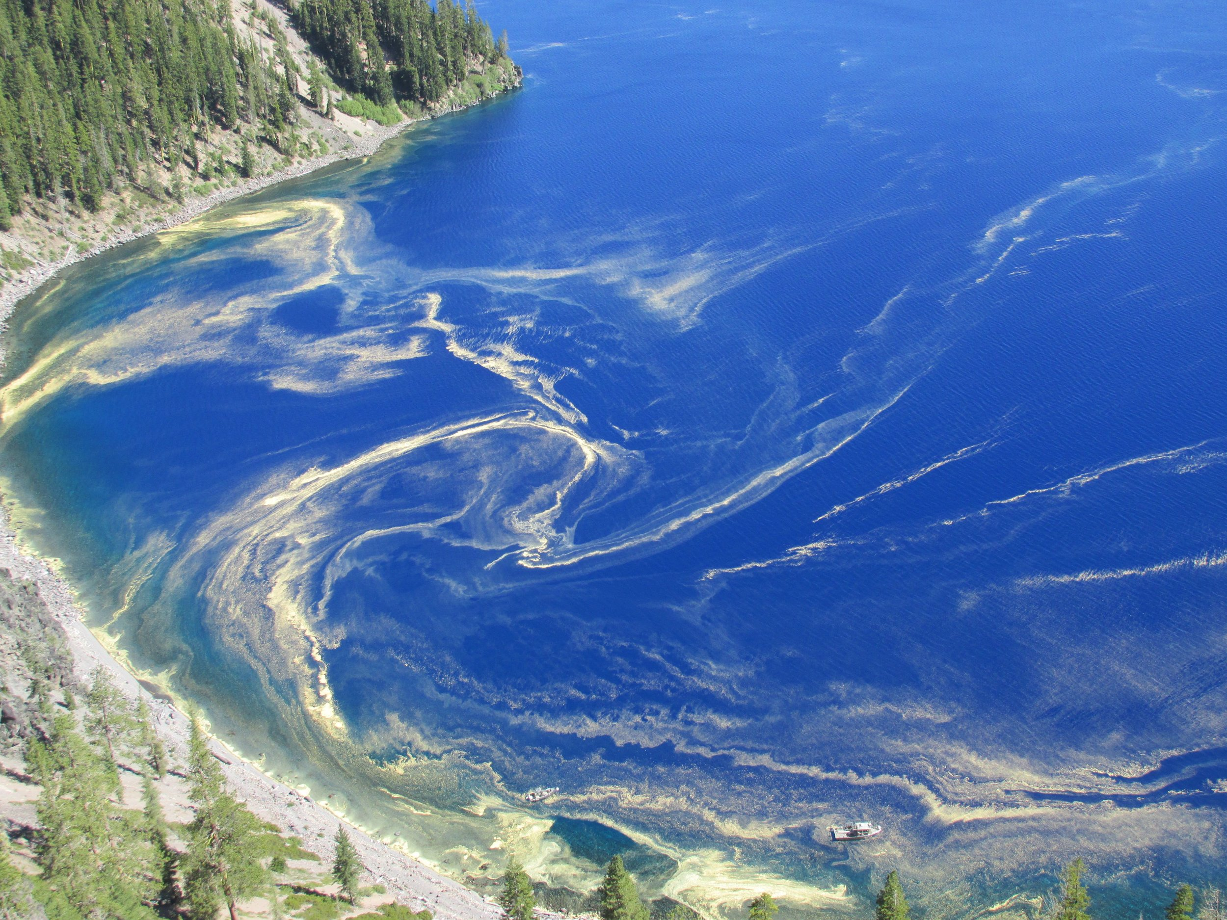 Pine pollen in Crater Lake, Oregon. Photo by Tanya Muzumdar.