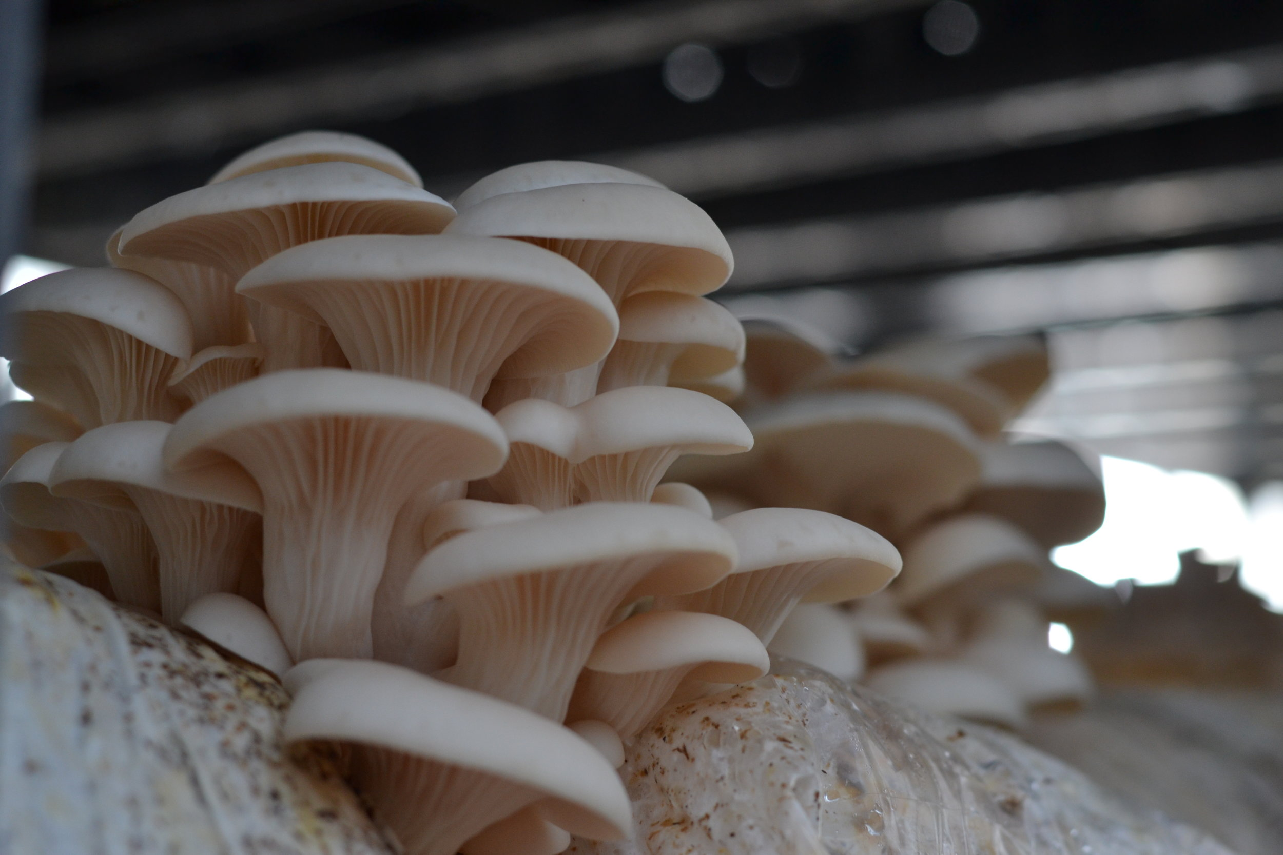 NEW - Tony and Tegan from FreshCap Mushrooms recently visited our farm and wrote a great article about what we do here at WTF.