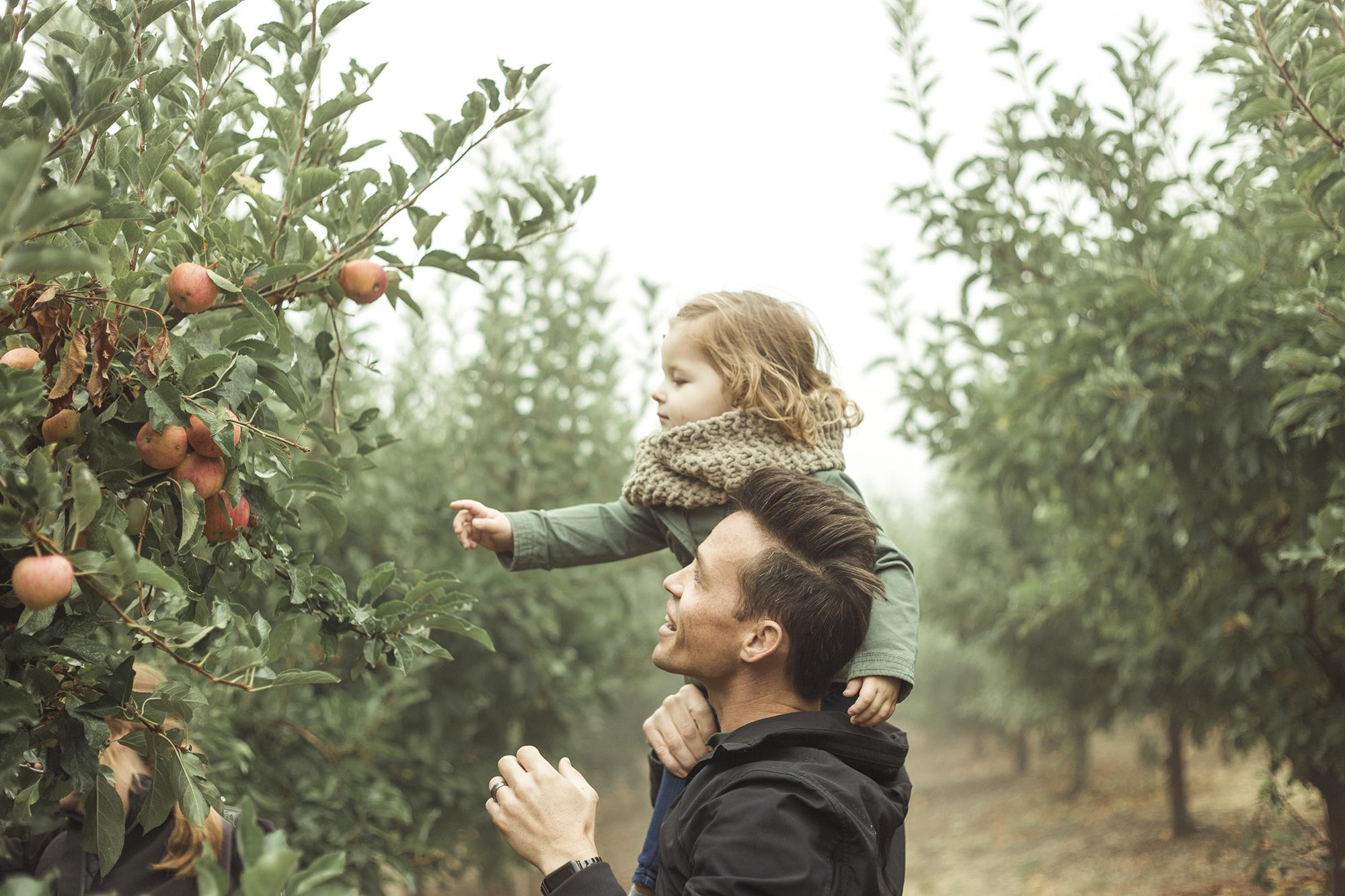 Apple Picking - Riley Los Rios Oak Glen-2.jpg