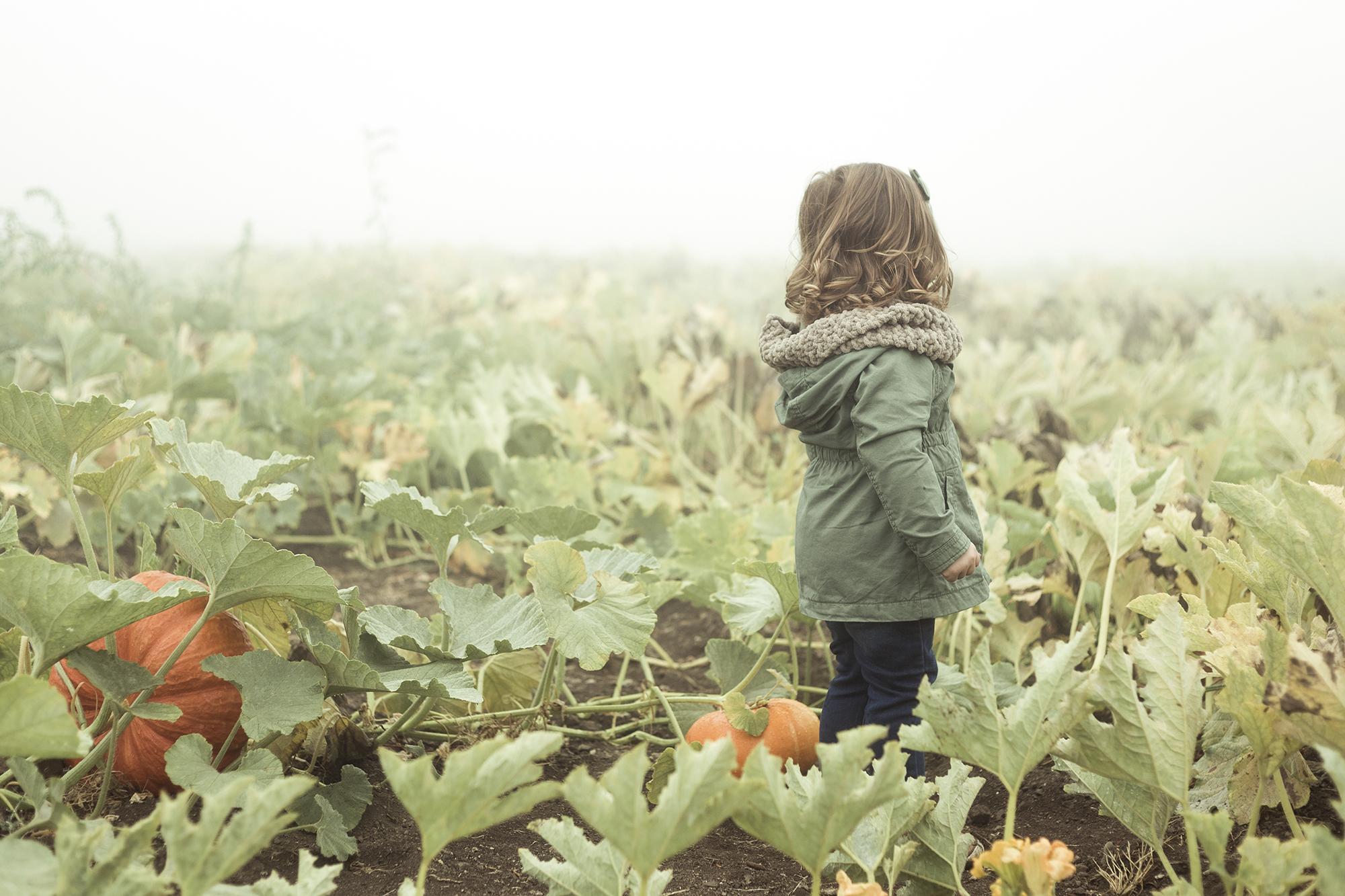 Apple Picking - Riley Los Rios Oak Glen-5.jpg