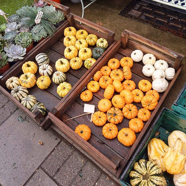 Spotted 👀 Autumn  #pumpkinpie #spennysucculents