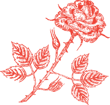 Rose-small.png