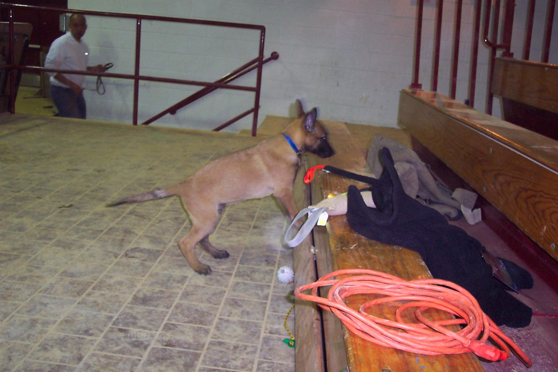Dogs 047.jpg