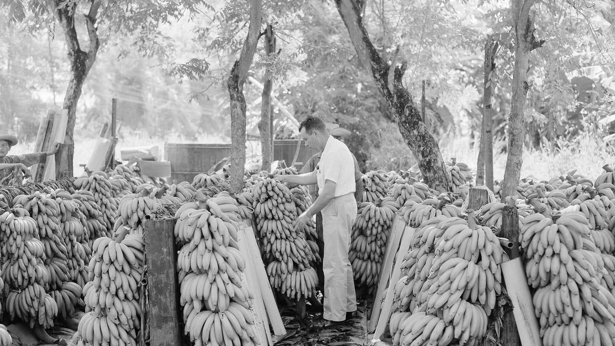 banana-king-cohen-tease_zeuuja.jpeg