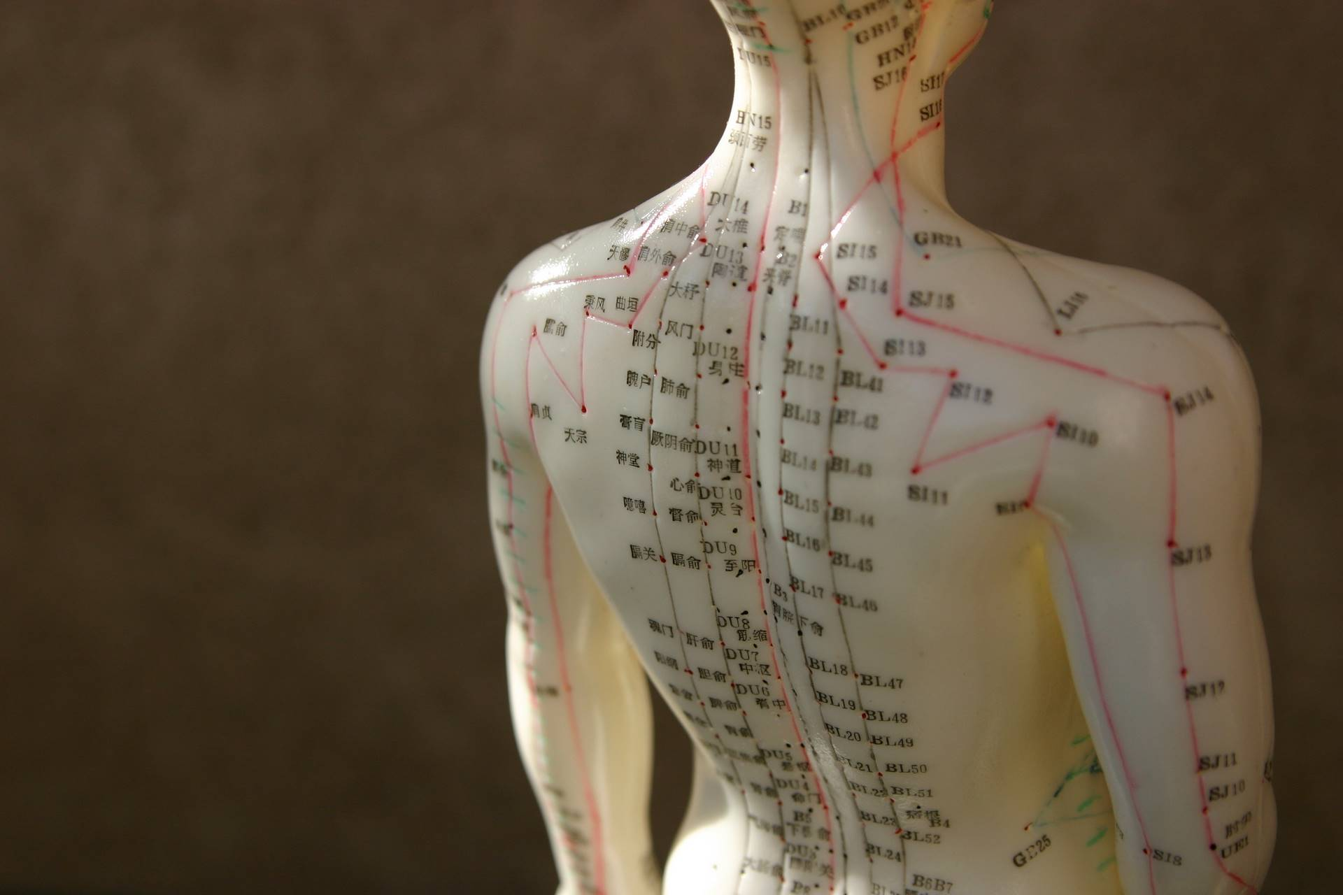 qi_yin_yang_five-elements_the-meridians-internal-organs-causes-diseas-traditional-chinese-medicine-stockholm-6.jpg