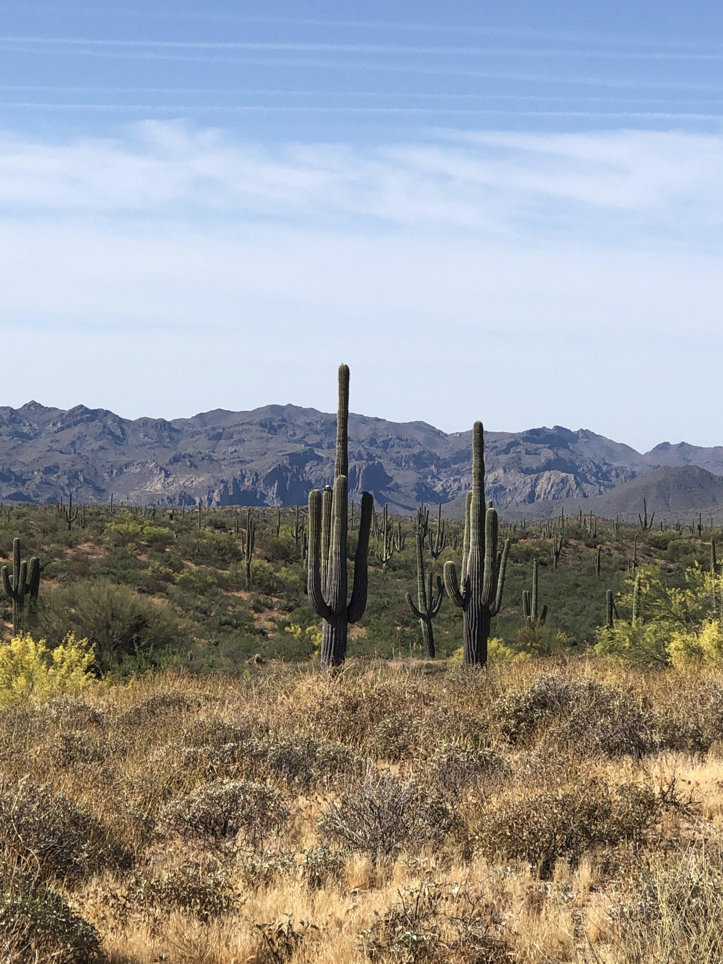 10ft + cacti. Incredible.