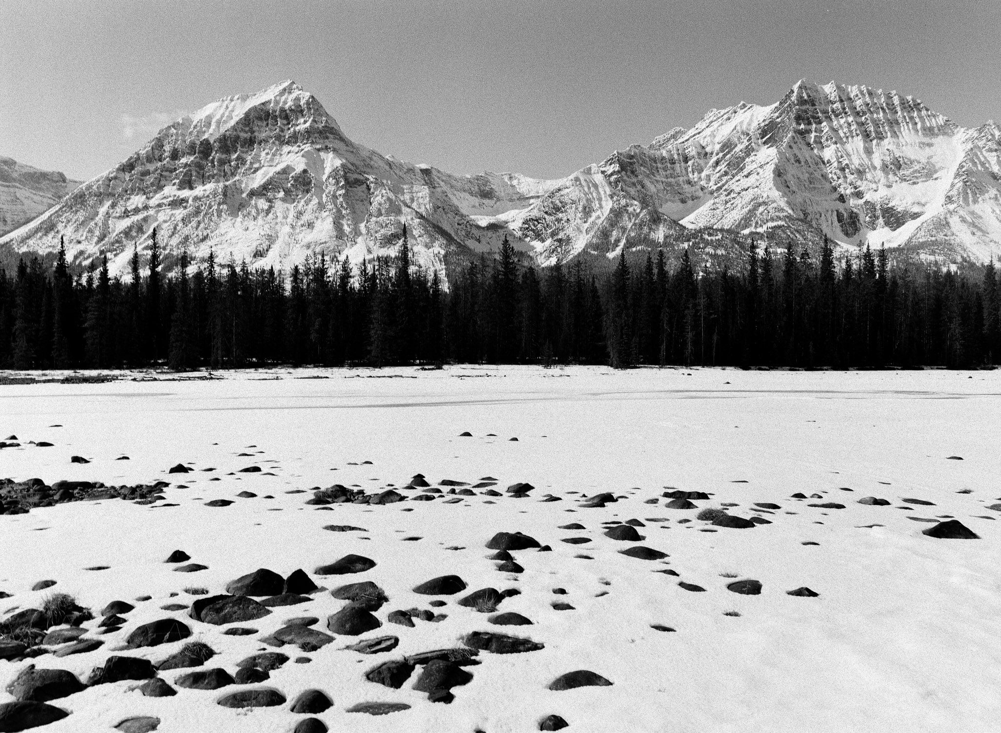 Along the frozen banks of the Athabasca River. // TMAX400