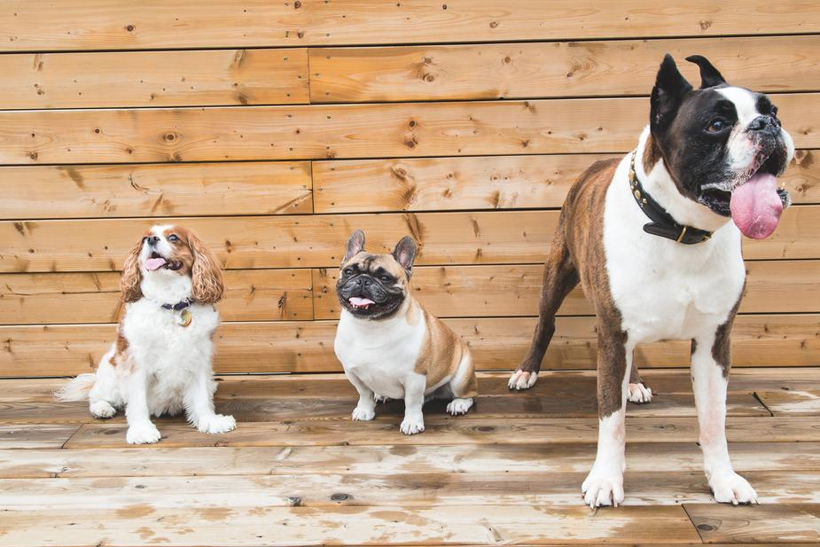 brown-white-dogs_925x.jpg