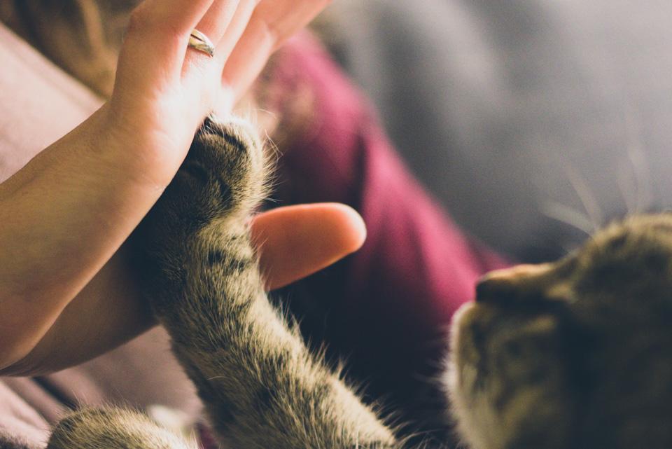 eric-cat-ward-610868.jpg