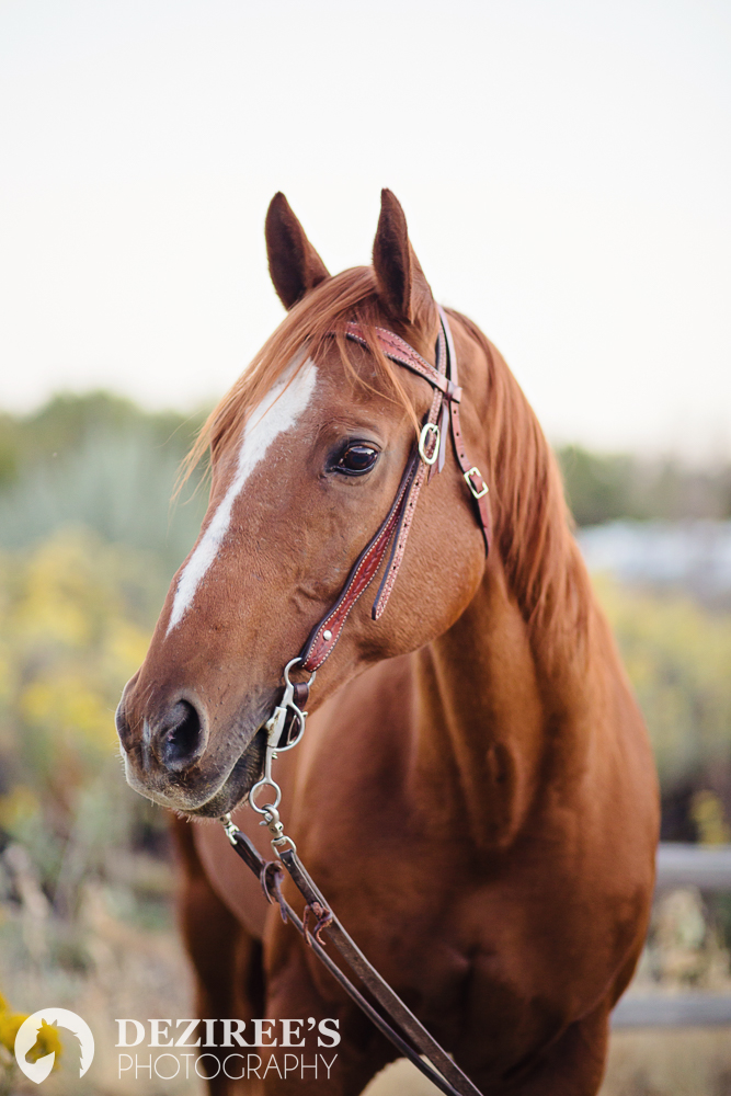 Types of photos at your Michigan equestrian photo shoot