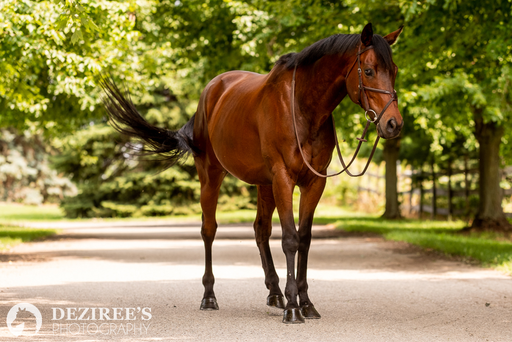 Quick tips for getting your horse ready for your session with a Michigan horse photographer