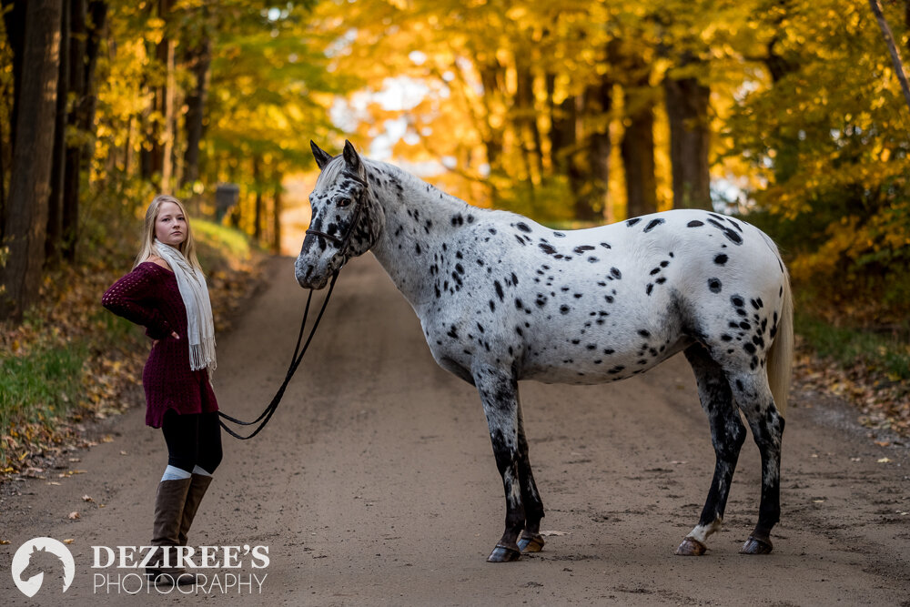 Autumn equestrian michigan photography in the fall colors