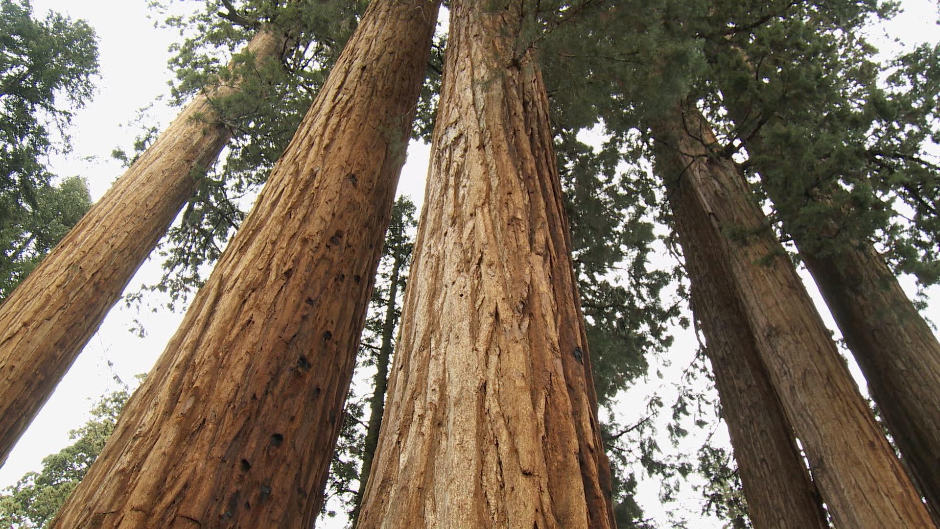 Sequoia Nat Park.jpg
