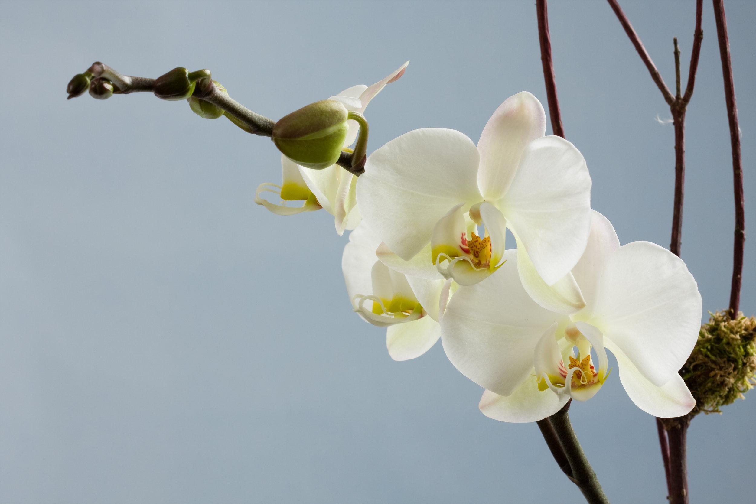 1160RC_IMG_3123flowers.jpg