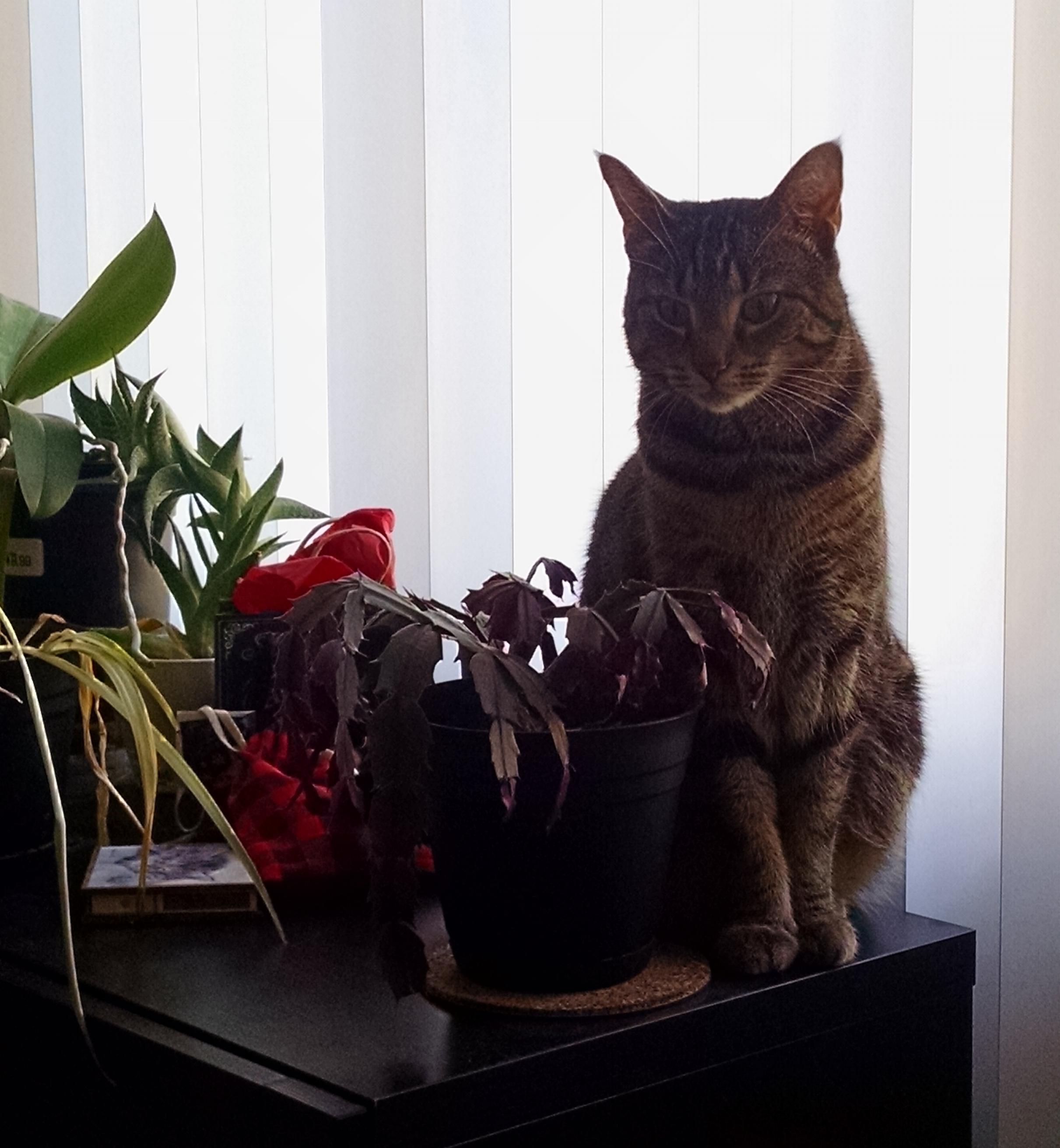 Cat pic.jpg
