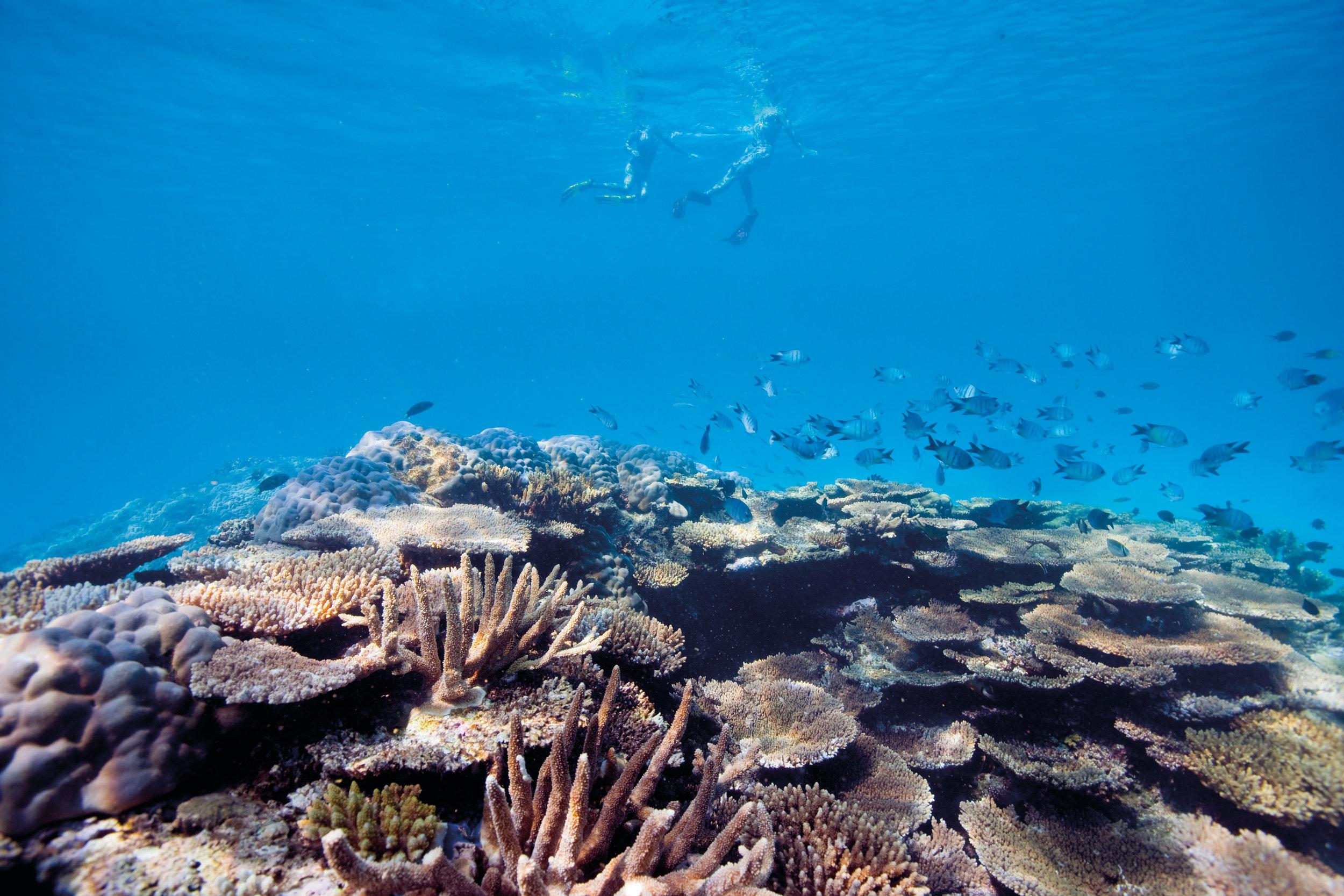 105826-634 Snorkelling_Coral_Great Barrier Reef.jpg