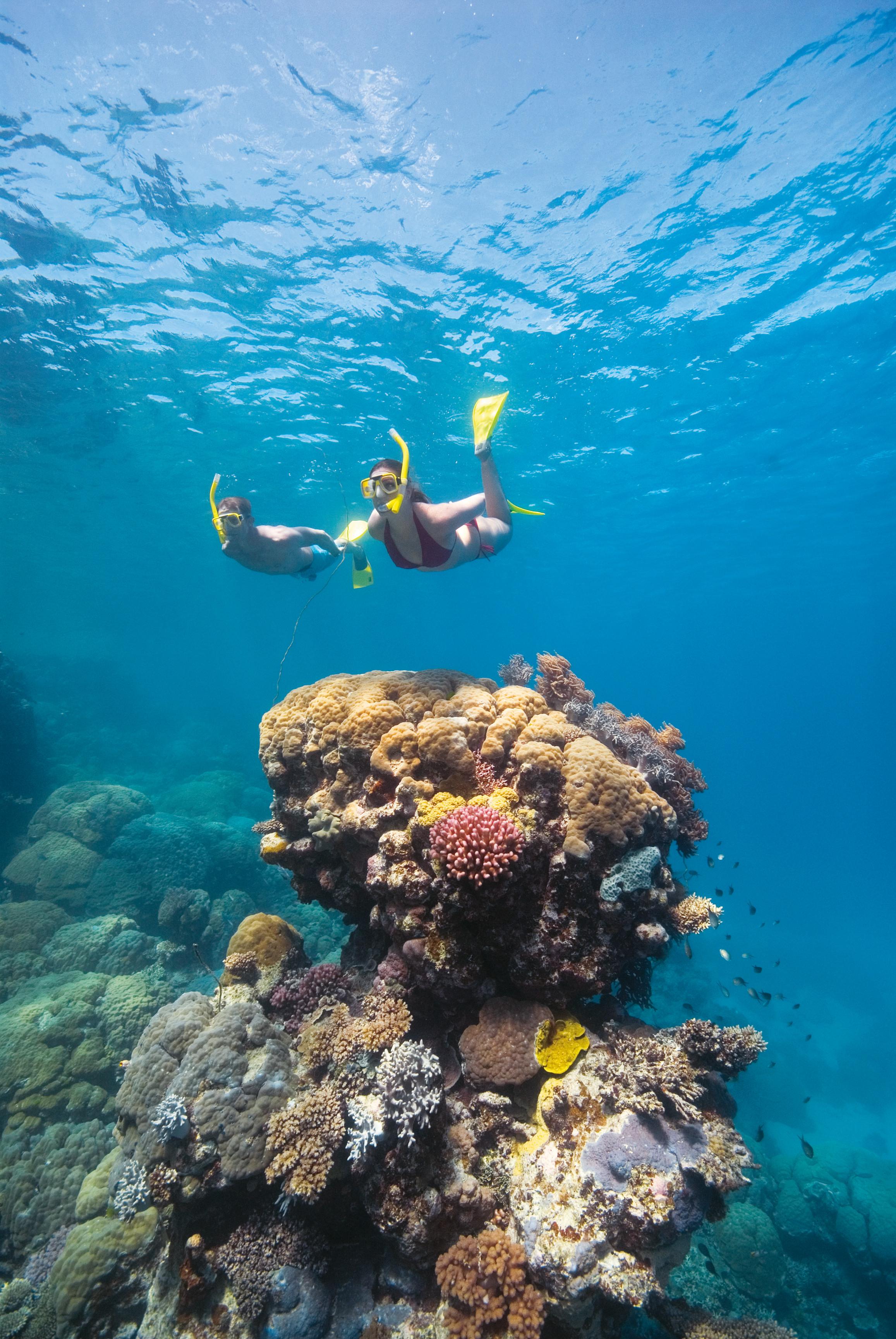 Snorkelling_Coral_Great Barrier Reef.jpg