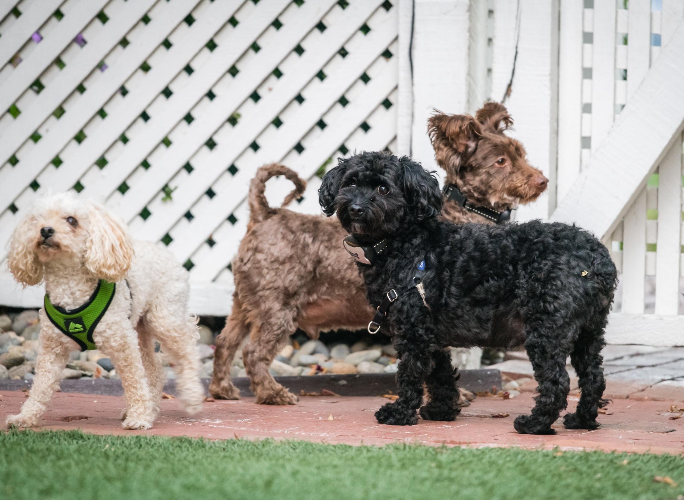 Inn Dogs!.jpg