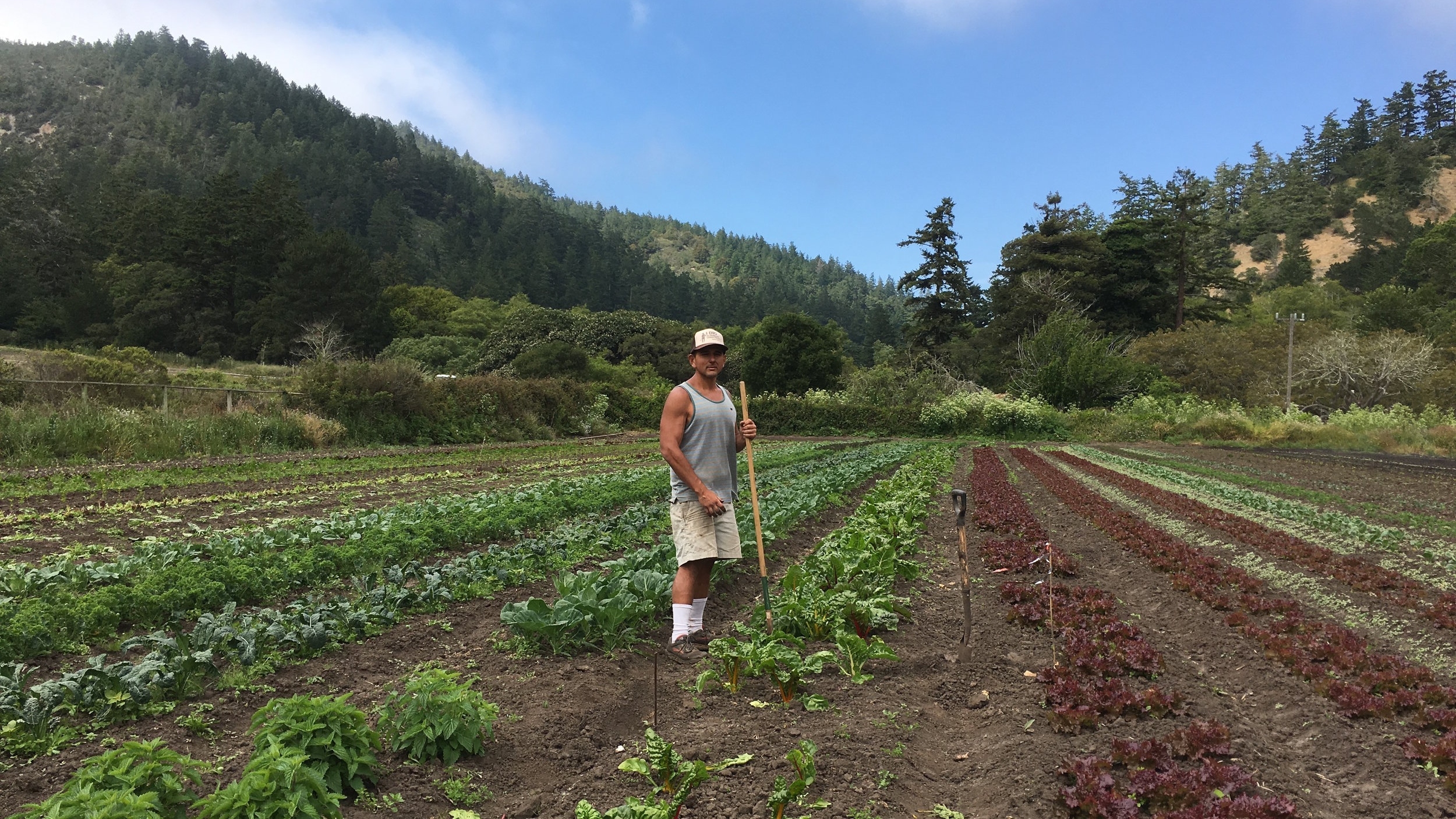 Regenerative Agriculture -