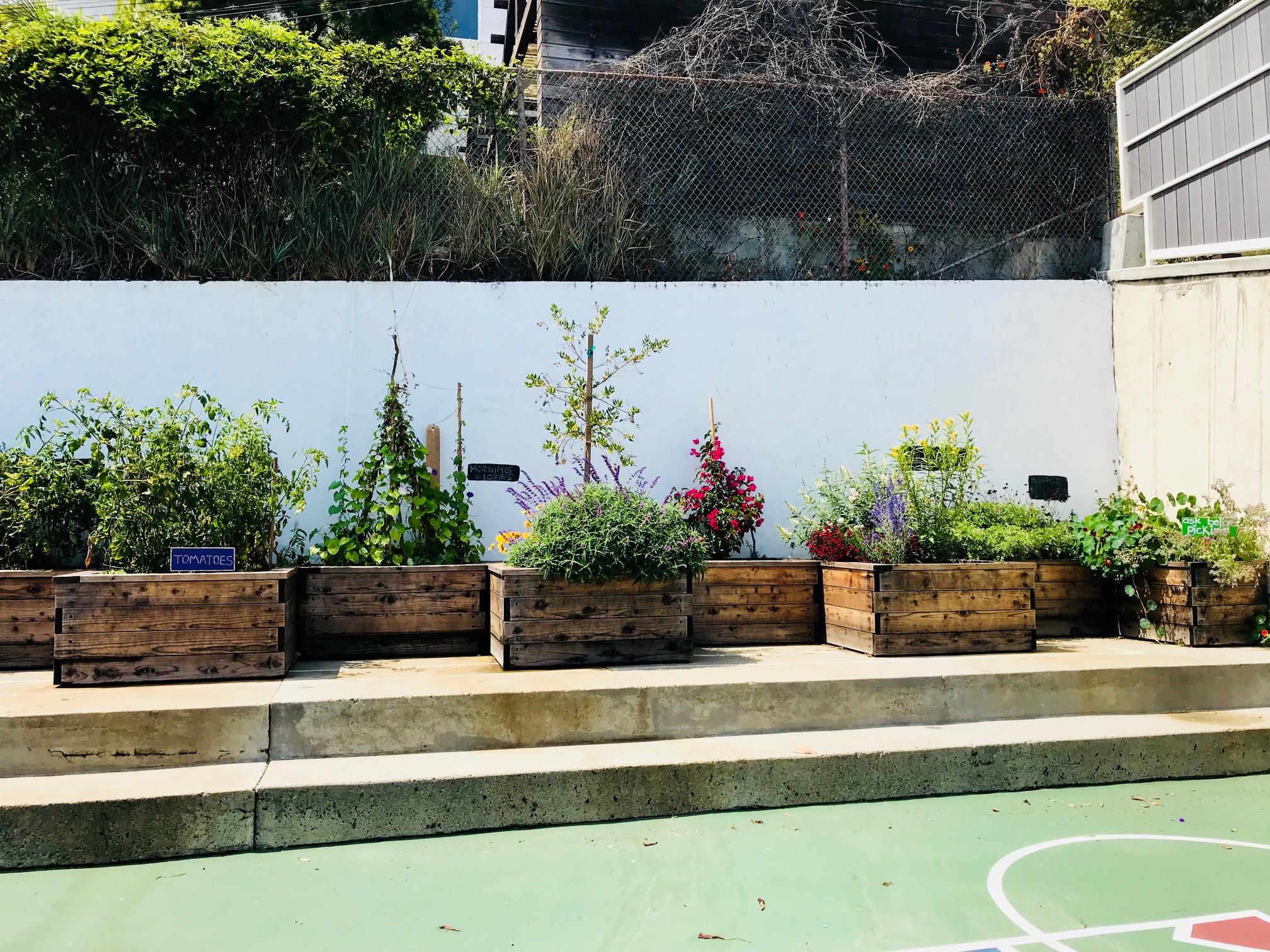 Garden overview.jpg