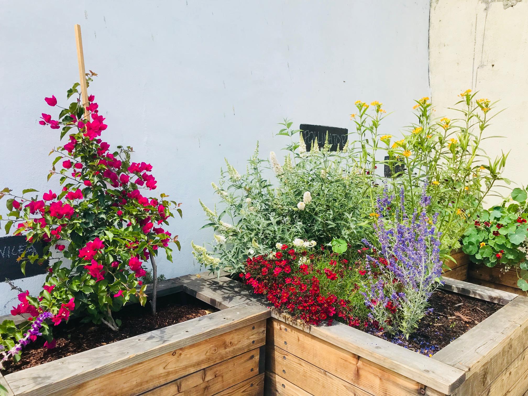 Our Pollinator Garden