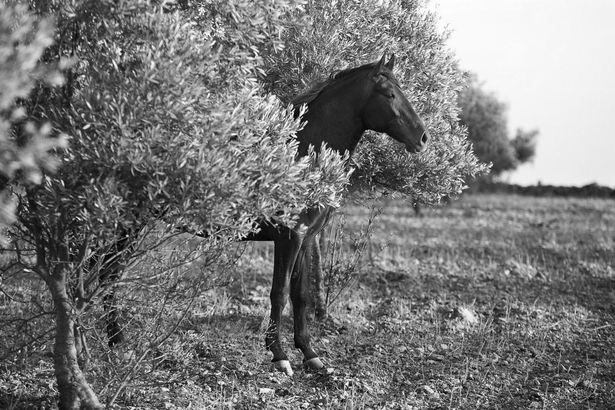 Sortie de l'arbre sacré