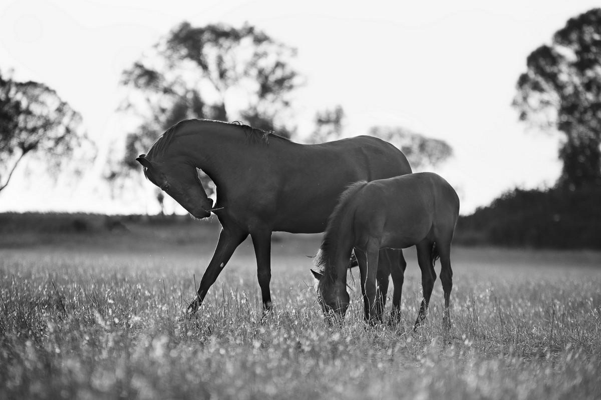 Mère et fils dans la plaine