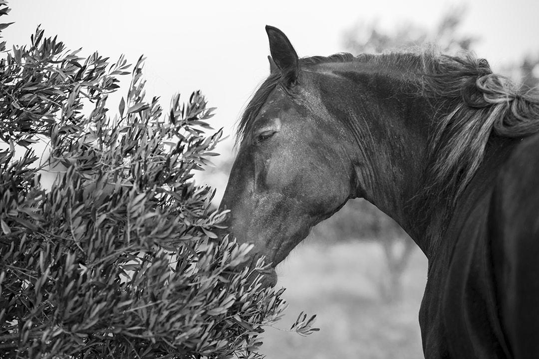 Une odeur d'olives