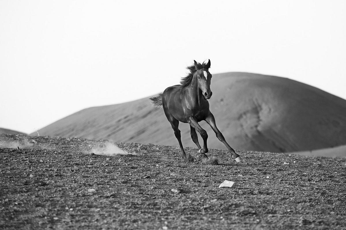 Petit galop dans le désert