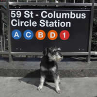 Laura Young Columbus Circle