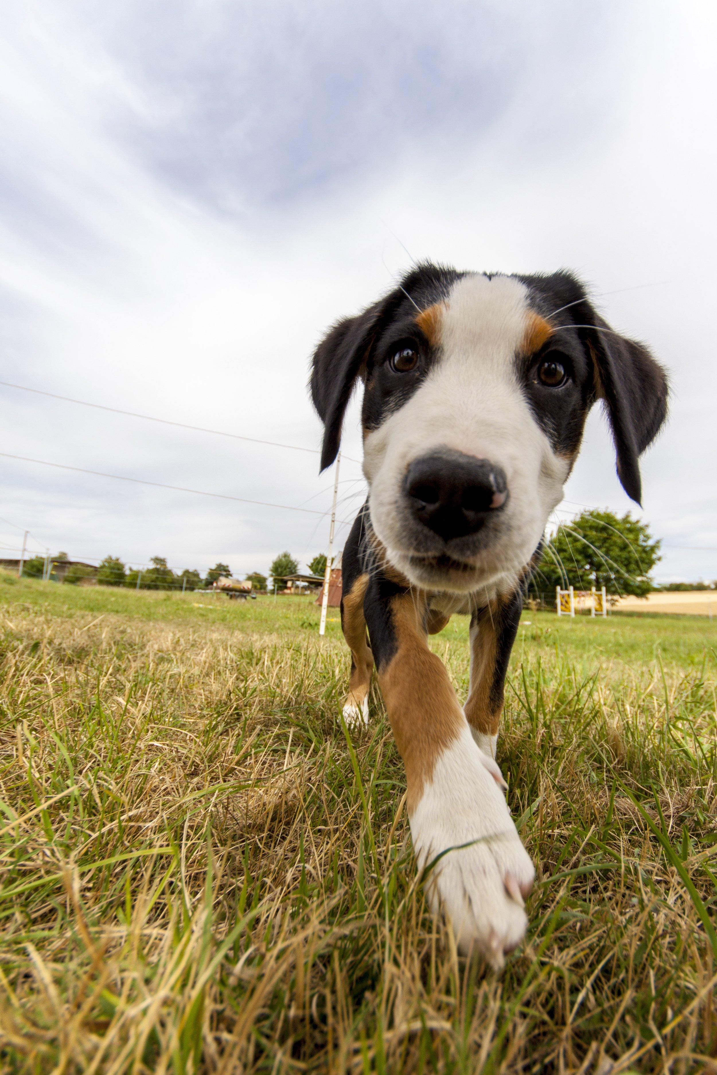 dog-2540086 - Copia.jpg