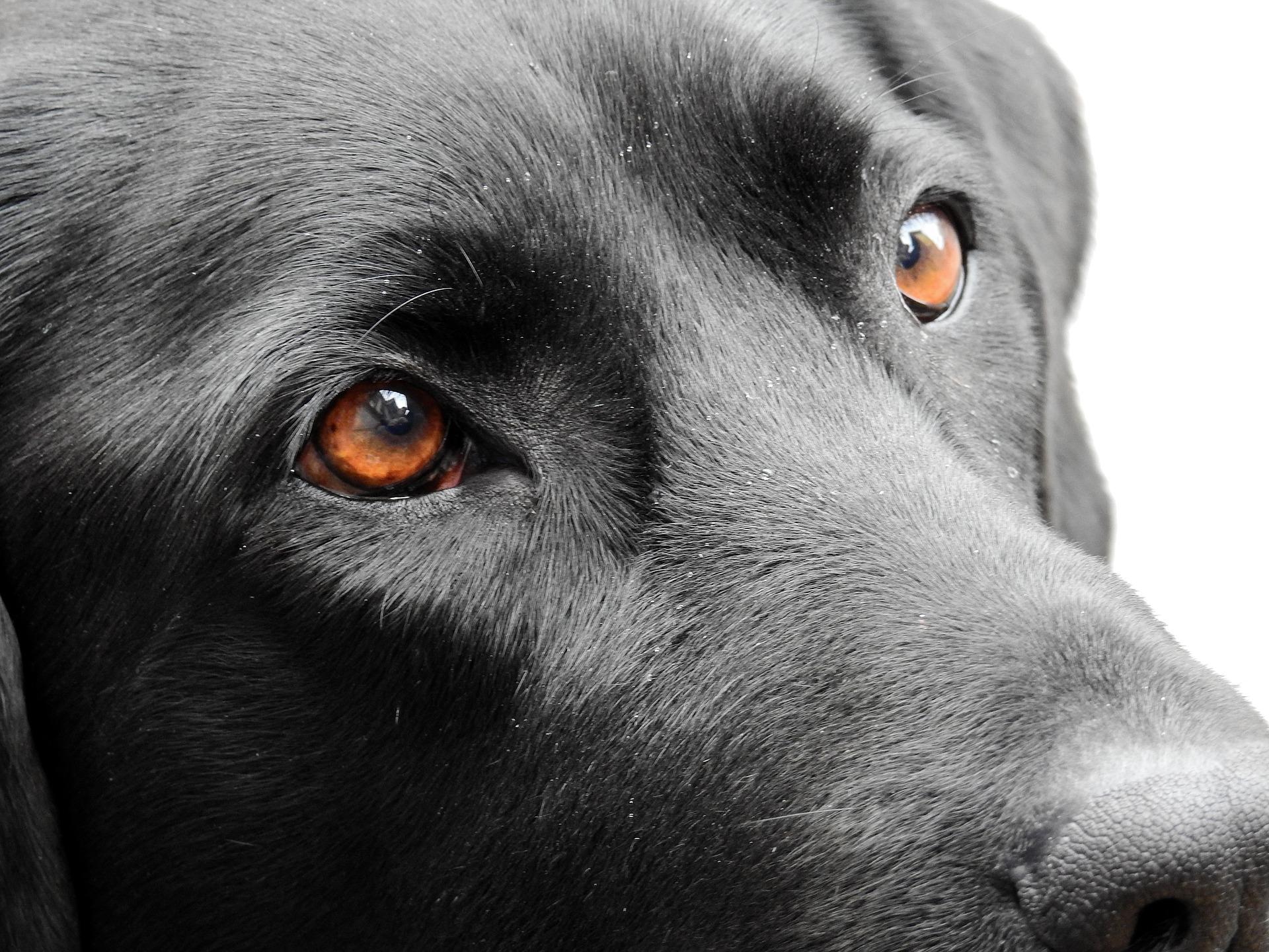 dog-1733145_1920 - Copia.jpg
