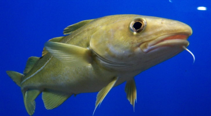 fish species moving north -