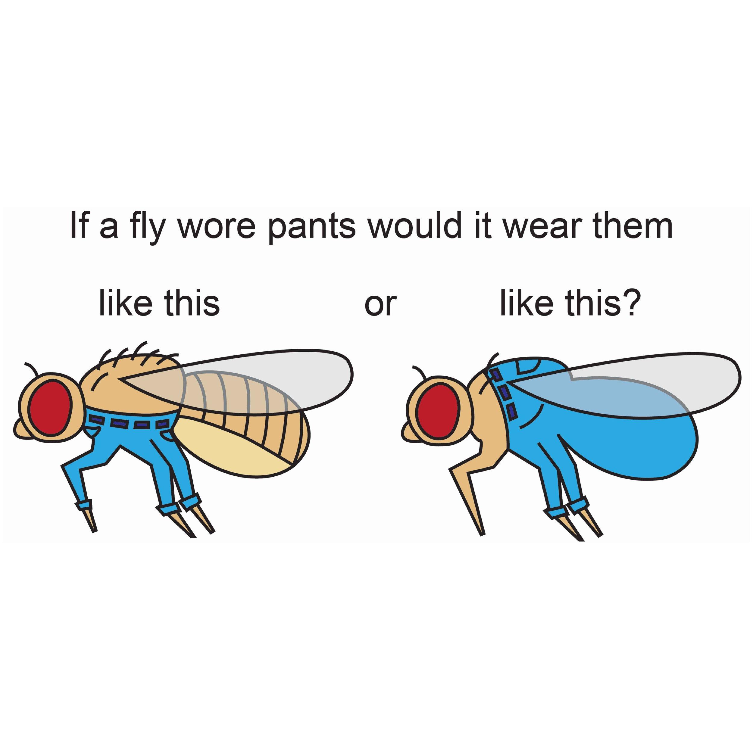September 2019 – An important question. Thanks #drosophiladiez