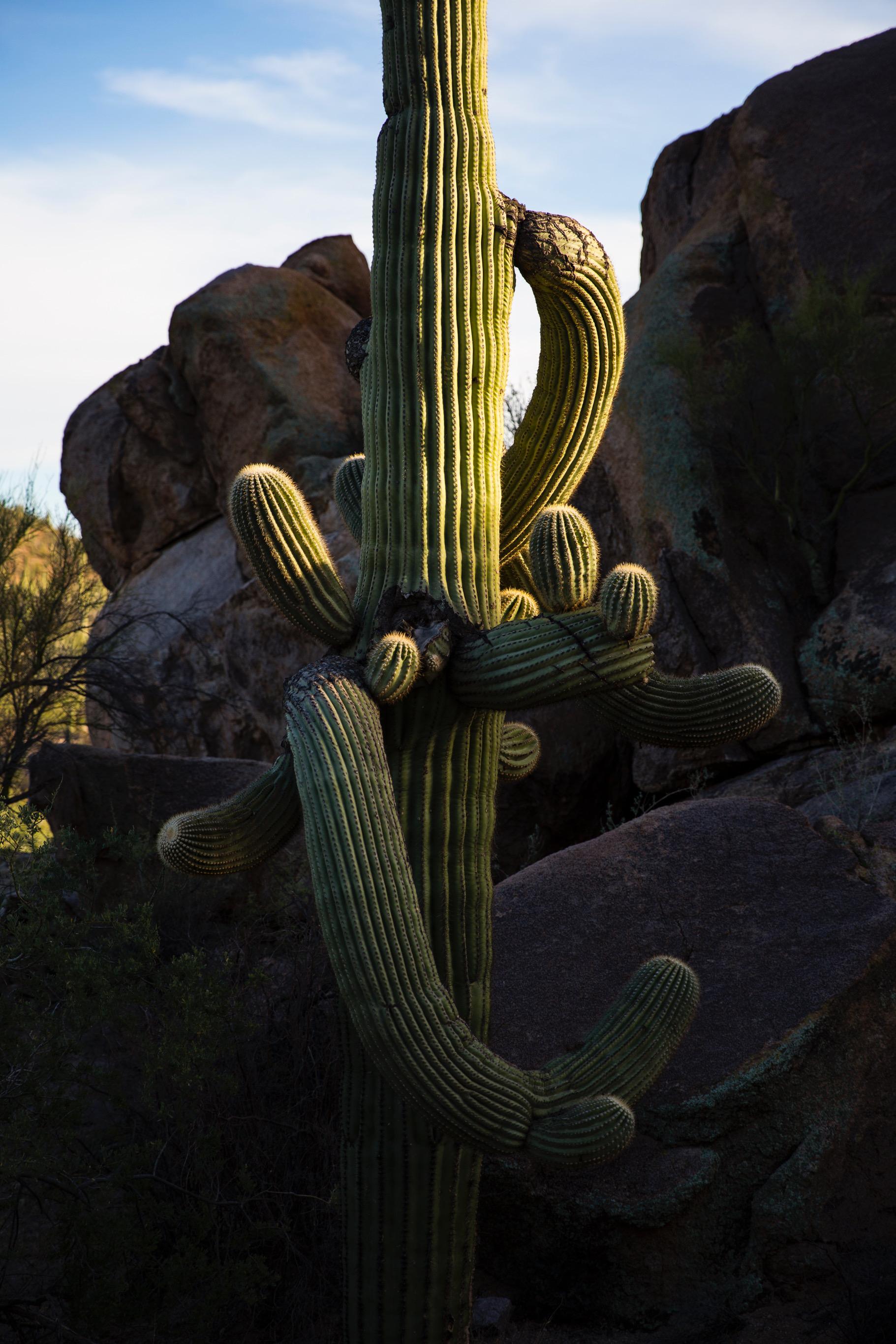 SaguaroNP418.JPG