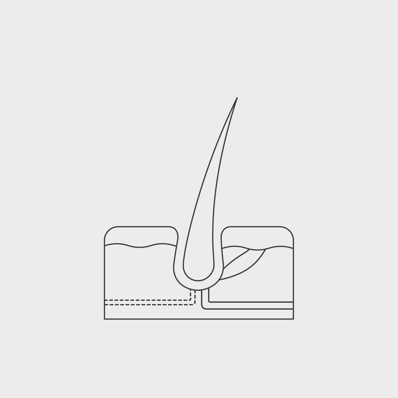 Hair Science – Hair follicle structure animation build 2