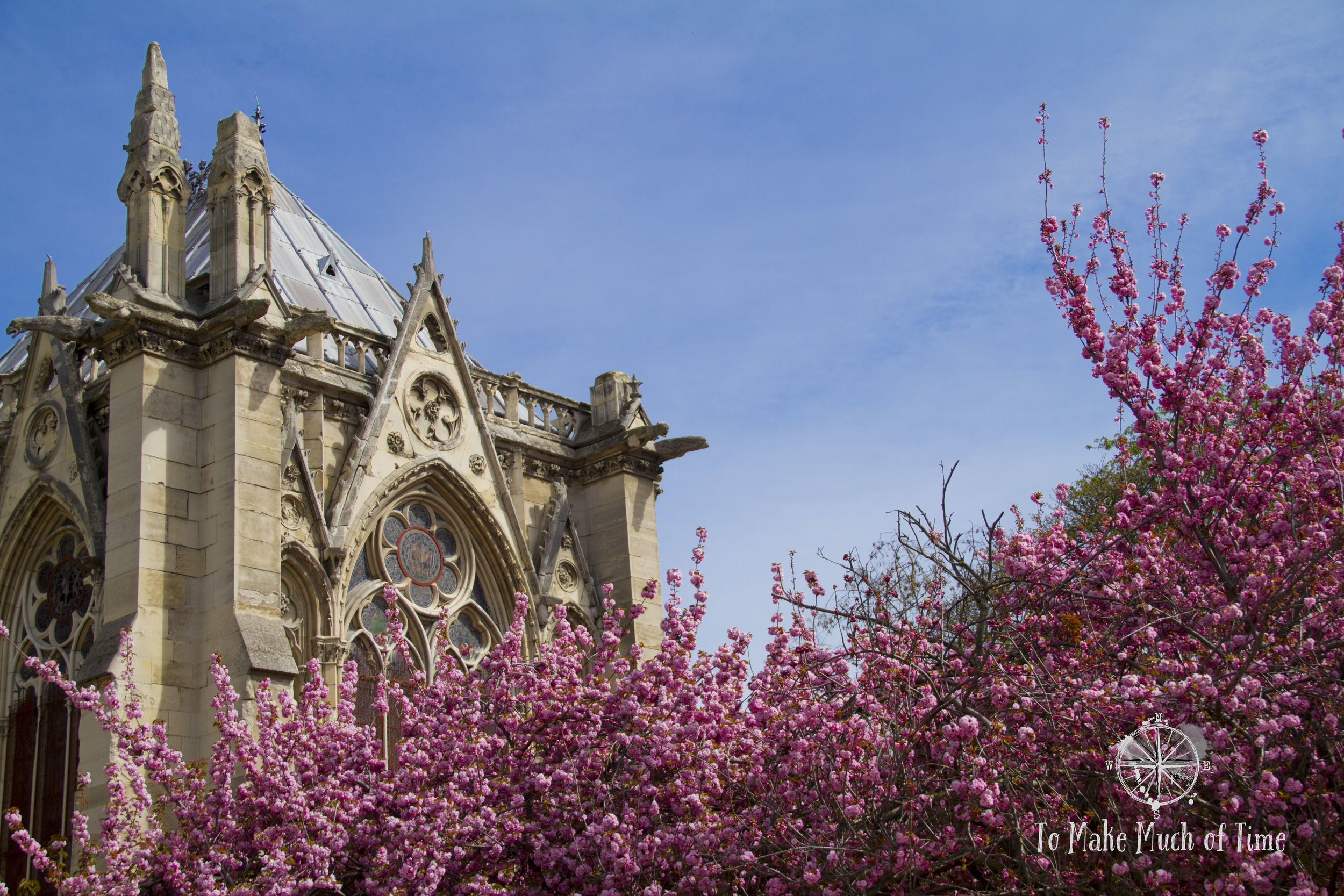 Cherry Blossom trees of Notre-Dame.