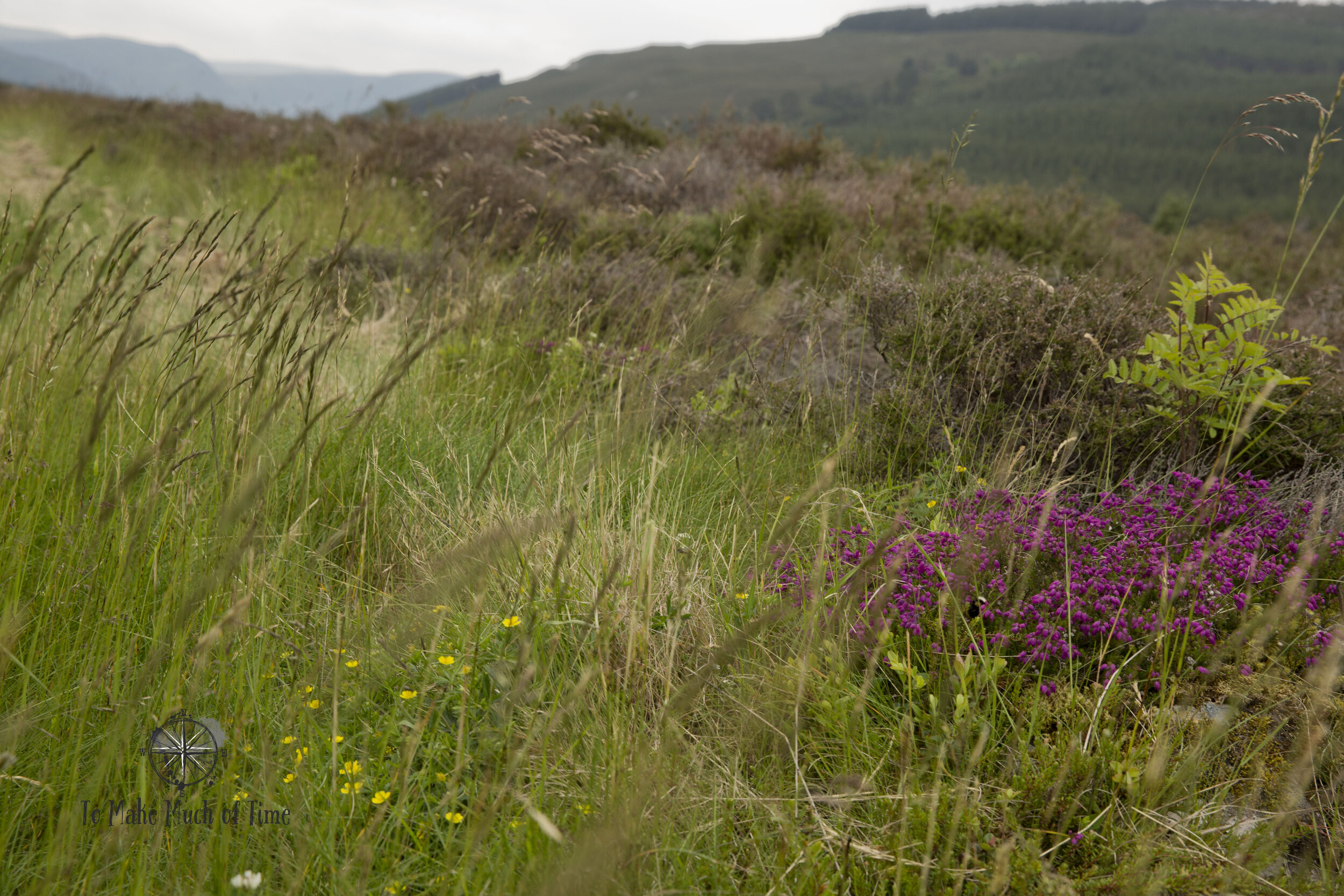 Grasses and heather (mostly heather) surrounded us as we hiked through Heather Moors along River Feshie.