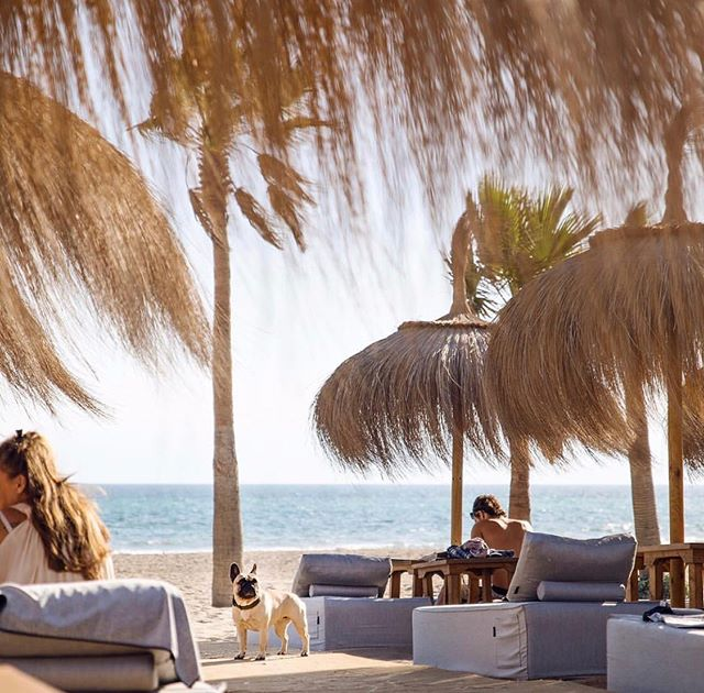 Strong Parasol Game 🥜#beachclubdesign#interiordesign#insideout#marbs#beach#sunbeds#view#tointeriordesign#inspo