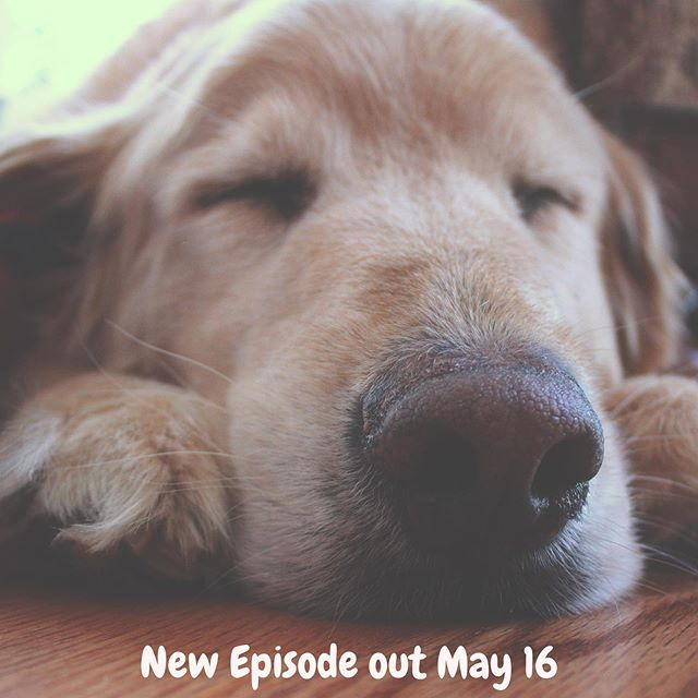Hi! It's us again.... we're still recovering from our own spring break sooooo we'll be back next week. In the meantime here is a cute sleepy doggo 🐶xoxo . . . #rest #dog #sleepy #same #popculture #shitshow #nextweek #comebacklater #ttyl #podcast