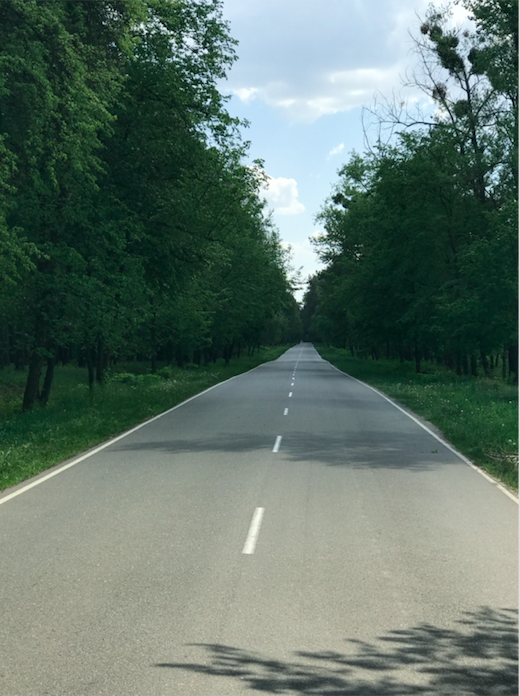 The road and trees in Ukraine