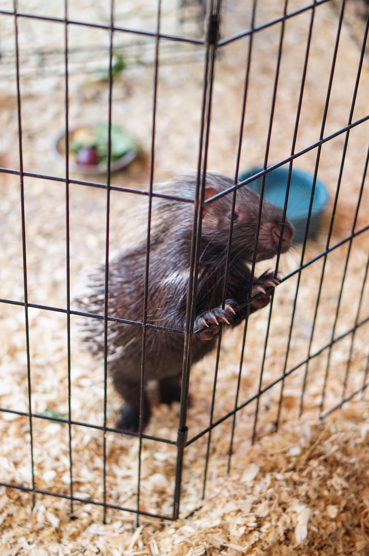 petting-zoo-9.jpg
