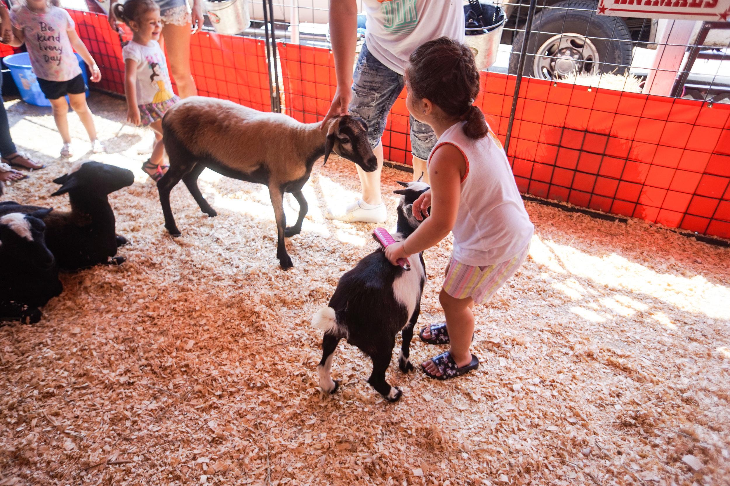 petting-zoo-17.jpg